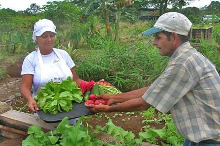La-Anita-rainforest_lodge-Gemüsegarten