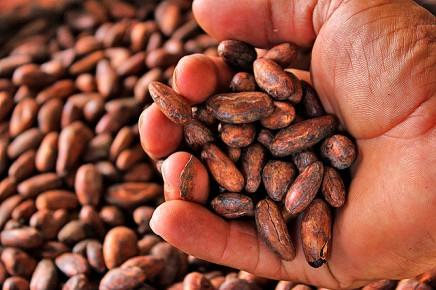 La-Anita-rainforest_lodge-Schokoladebohnen
