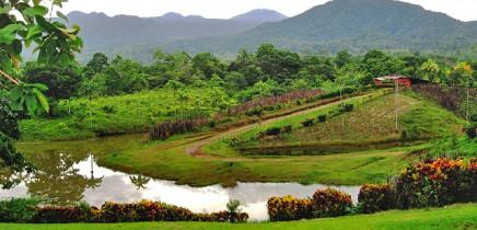 La-Anita-rainforest_lodge--tropische-Gartenanlage