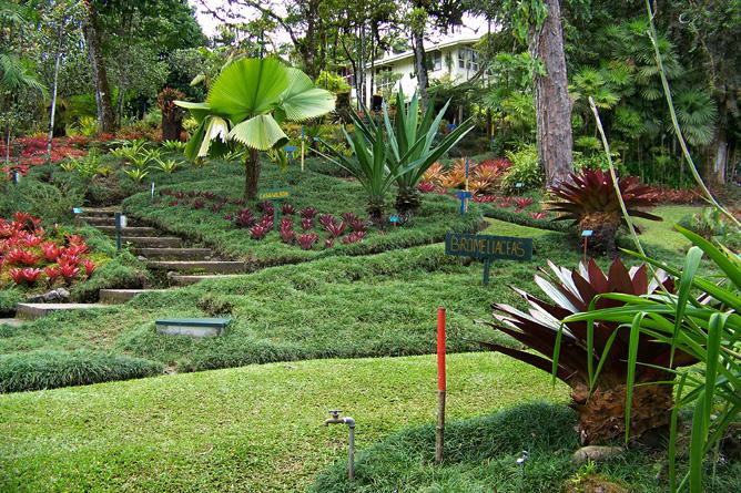 San Vito Botanischer Garten Wilson
