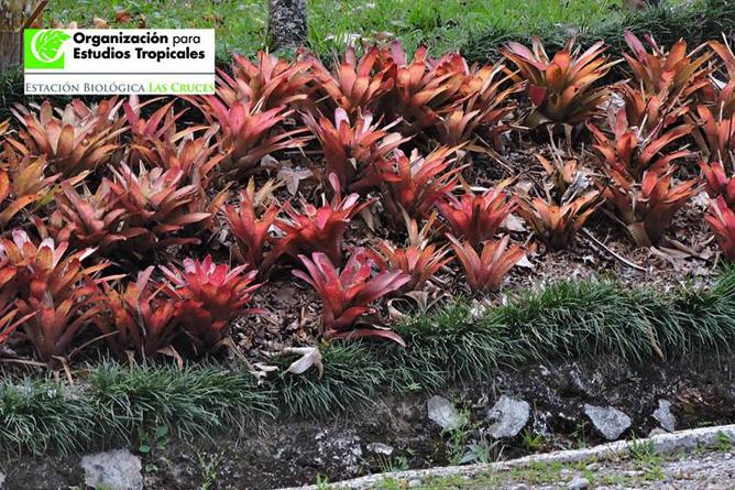 San Vito Botanischer Garten Wilson Bromelien