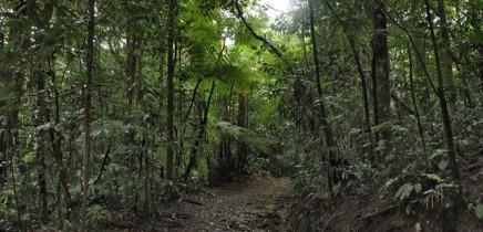 San_Vito_Botanischer-garten-wilson_Regenwald_Erholung_Micha-6-2018