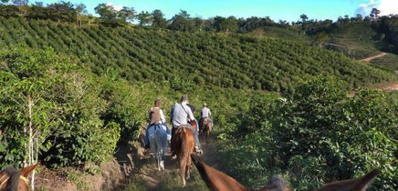 San_Vito_San-Vito_Kaffeeplantagen_Micha-06-201