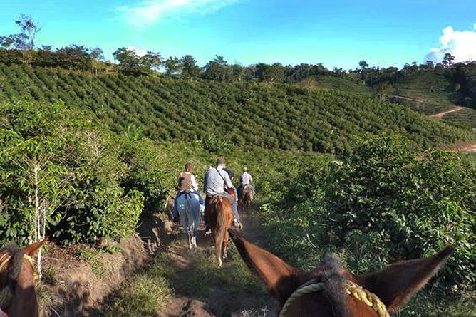 San Vito Kaffeeplantagen