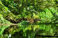 Sierpe-Mangroventour--Estero-Azul