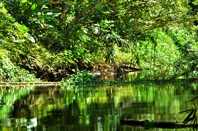 Sierpe-Mangroventour – Estero Azul