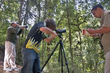 Dantica Lodge Vogelbeobachtung