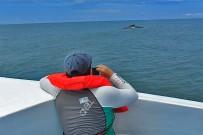 Uvita Meeresnationalpark Ballena Walbeobachtung