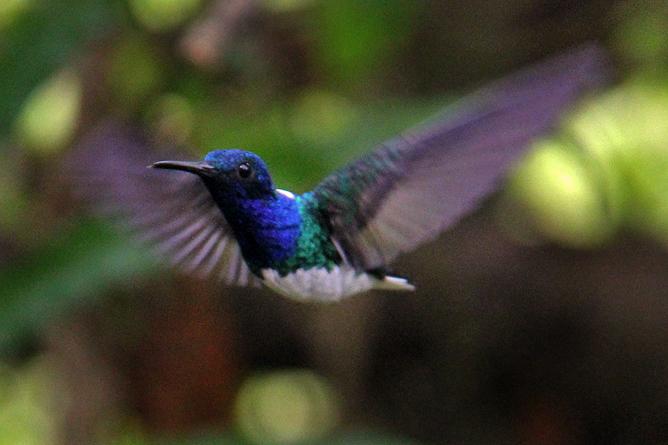 Boca Tapada – Kolibri