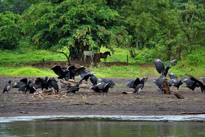 Boca Tapada – Pferde und Vögel