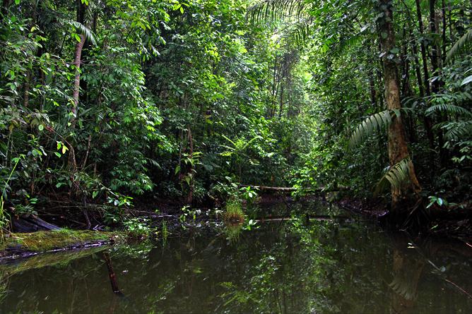 Boca Tapada – San Juan Fluss