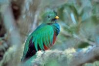 Dantica Lodge Quetzal