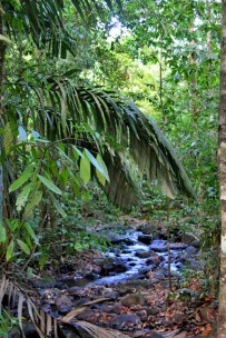 La Anita Rainforest