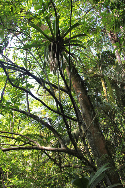 La Anita Rainforest