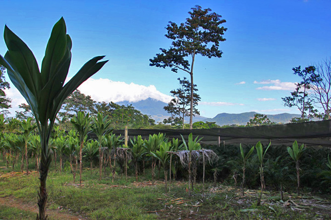 La Anita Rainforest Vulkan