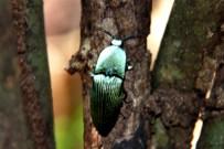 lagarta-lodge-insekt