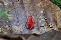 laguna-del-lagarto-frosch