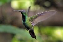 laguna-del-lagarto-kolibri