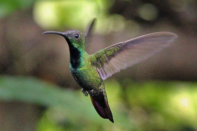 Laguna del Lagarto Lodge – Kolibri