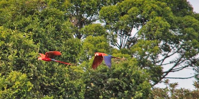 laguna-del-lagarto-papageien