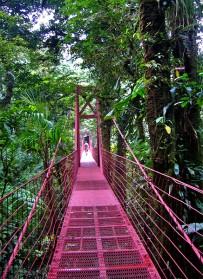 monteverde-urwald
