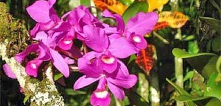 Rincón de La Vieja in Costa Rica - Flora