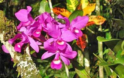 Rincón de La Vieja in Costa Rica – Flora