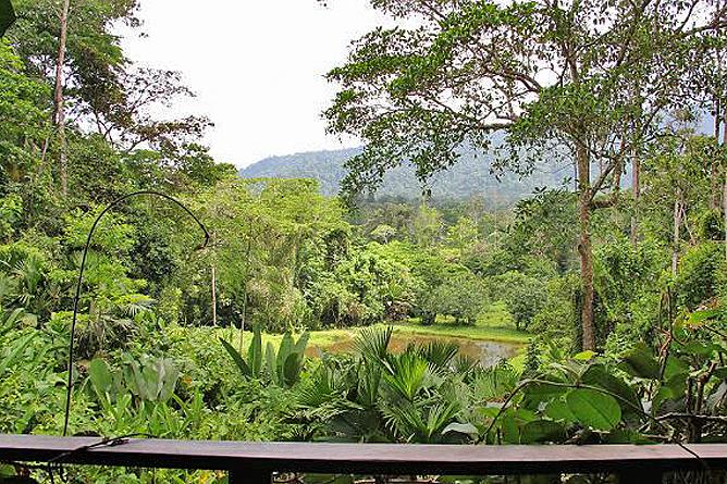 Selva Bananito Lodge Ausblick