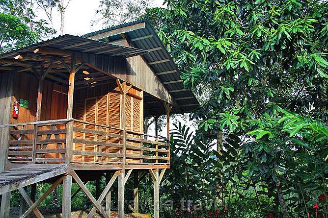 Selva Bananito Lodge Bungalow