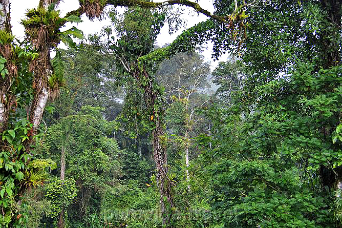 Selva Bananito Lodge Dschungel