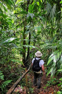 Selva Bananito Urwald Exkursion