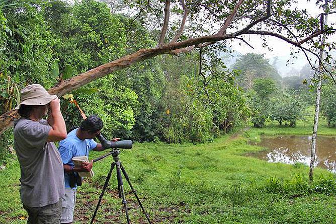 Selva Bananito Naturbeobachtung