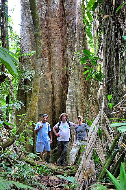 Selva Bananito Urwaldbaum