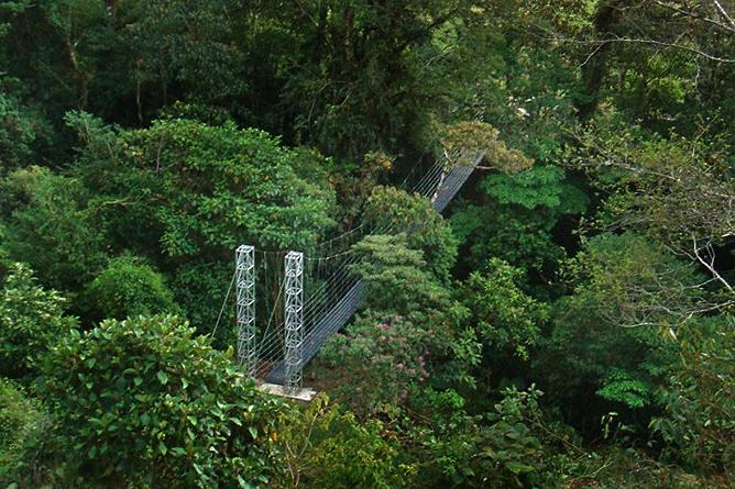 Albergue Pozo Verde – Quetzal-Lehrpfad: Hängebrücke