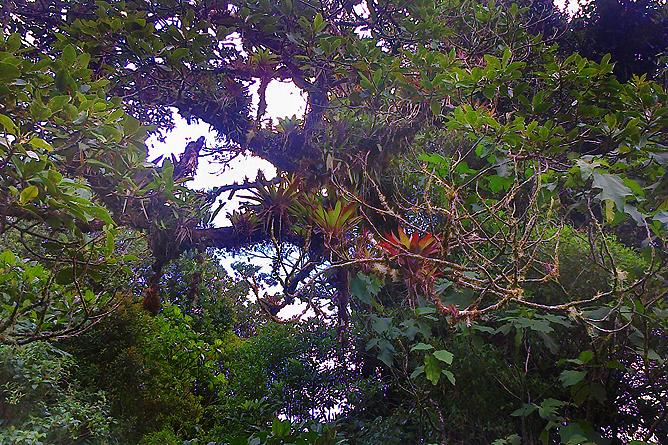 Albergue Pozo Verde – Natur: Epiphyten