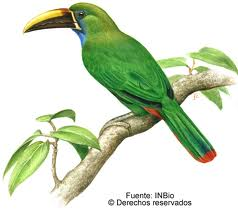 Albergue Pozo Verde – Natur: Grüner Tukan (INBIO)