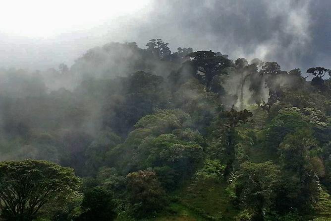 Albergue Pozo Verde – Natur: Nebelwald