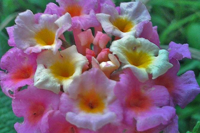 Albergue Pozo Verde – Natur: Wiesenblumen