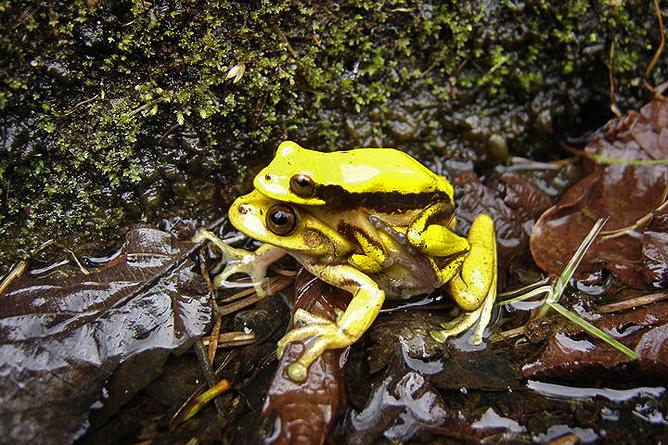 Albergue Pozo Verde – Natur: gelbe Frösche
