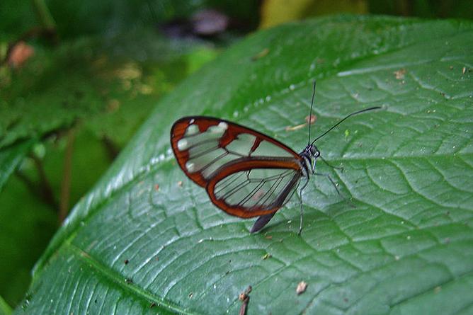 Albergue Pozo Verde – Natur: seltene Schmetterlingsart