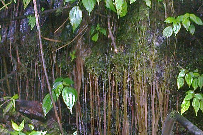 Albergue Pozo Verde – Tour: Ursprung Quellfluss La Vieja