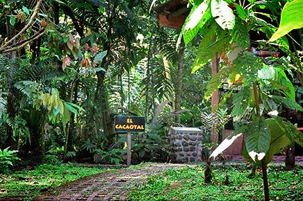 Tirimbina-Lodge – Schokoladetour