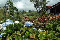 Guayabo-Lodge-hortensias