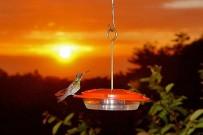 Kolibris-vor-Restaurant-Cloud-Forest-Lodge