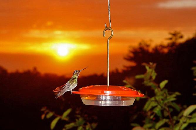 Monteverde Cloud Forest Lodge: Kolibris werden vor der Lodge gefüttert