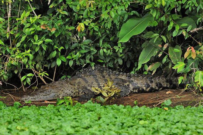 Mawamba Lodge Krokodil