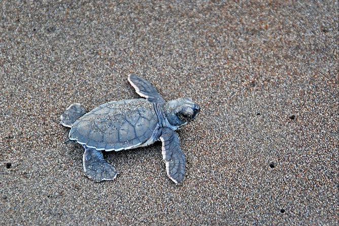 Mawamba Lodge – Schildkröte