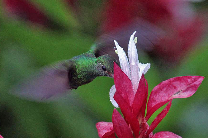 Pedacito de Cielo – Kolibri