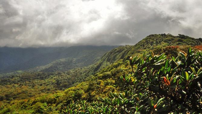 Monteverde Cloud Forest Lodge Blick