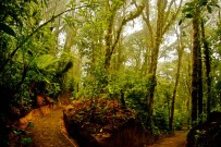 Wanderwege_Monteverde-Cloud-Forest-Lodge